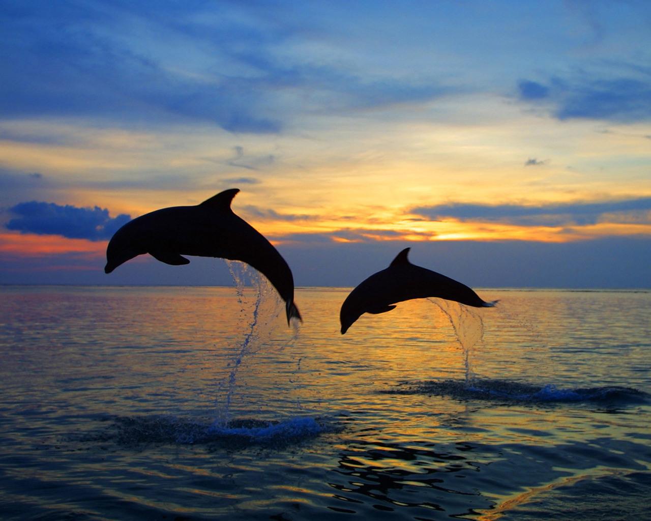 Картинка, Дельфины картинки, заставки на рабочий стол бесплатно