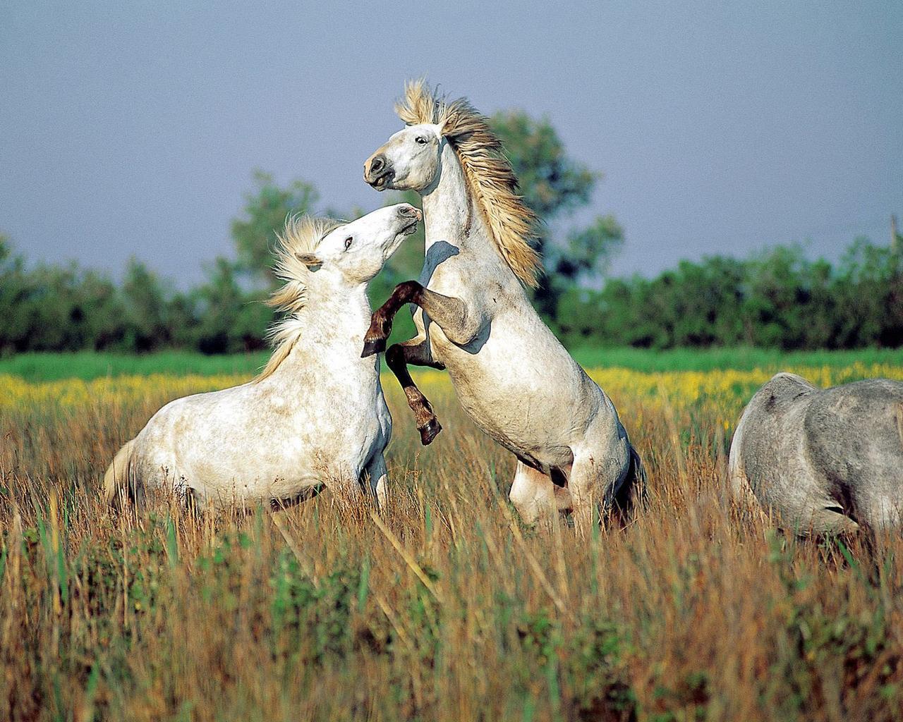 Bilder Wilde Pferde Und Sch Tapete Ndern Desktop Pictures