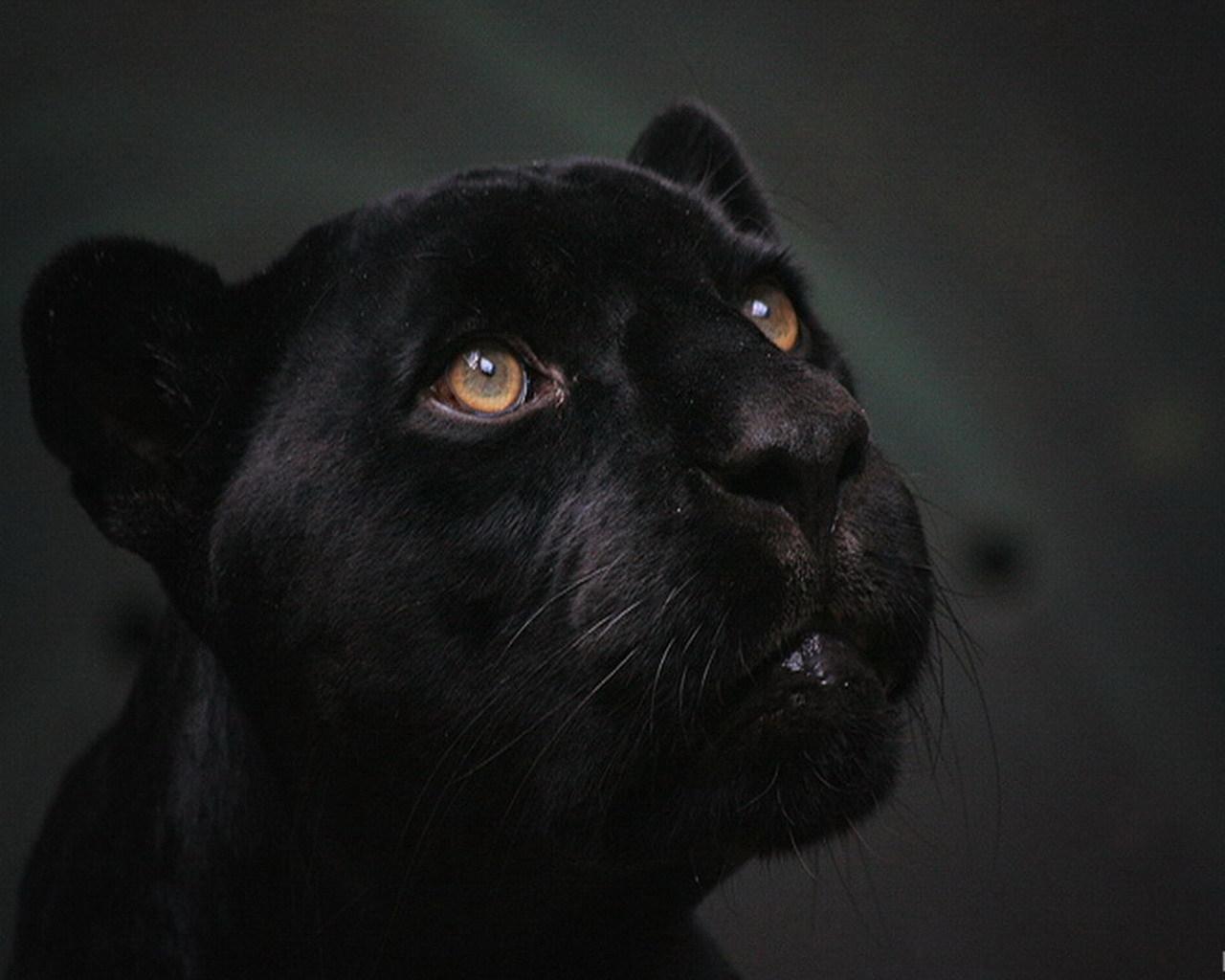Чёрный с большим дерет белую 29 фотография