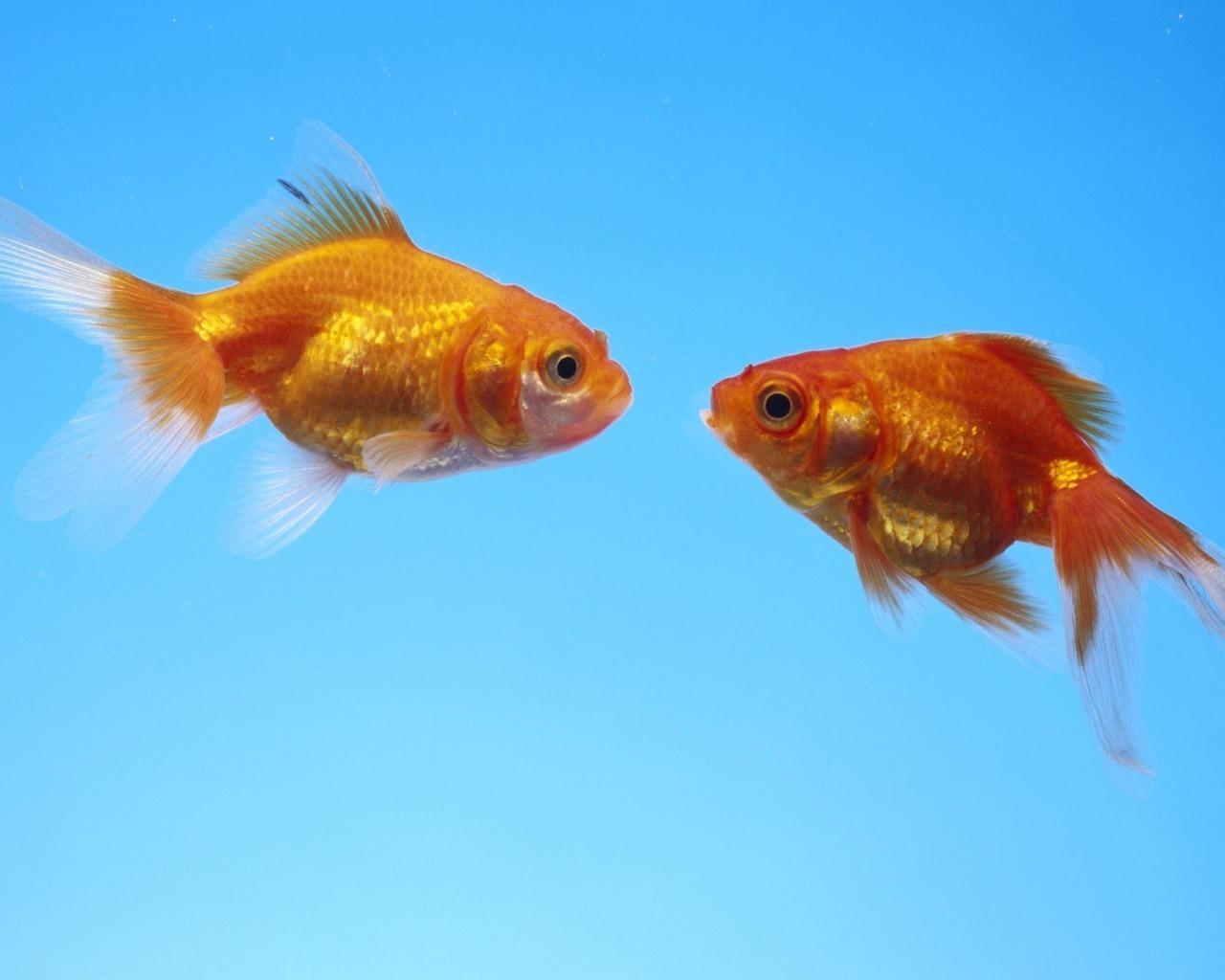 Рыбки картинки для детей цветные - 7