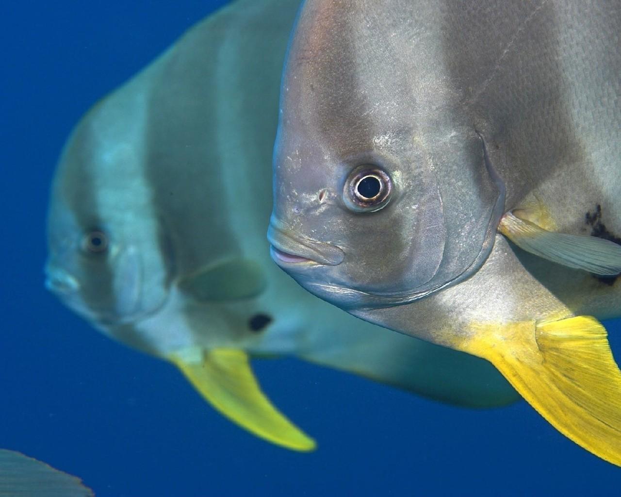 Картинка екзотичні риби завантажити
