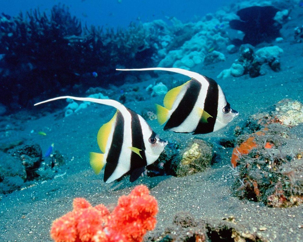 Картинка підводний світ картинки