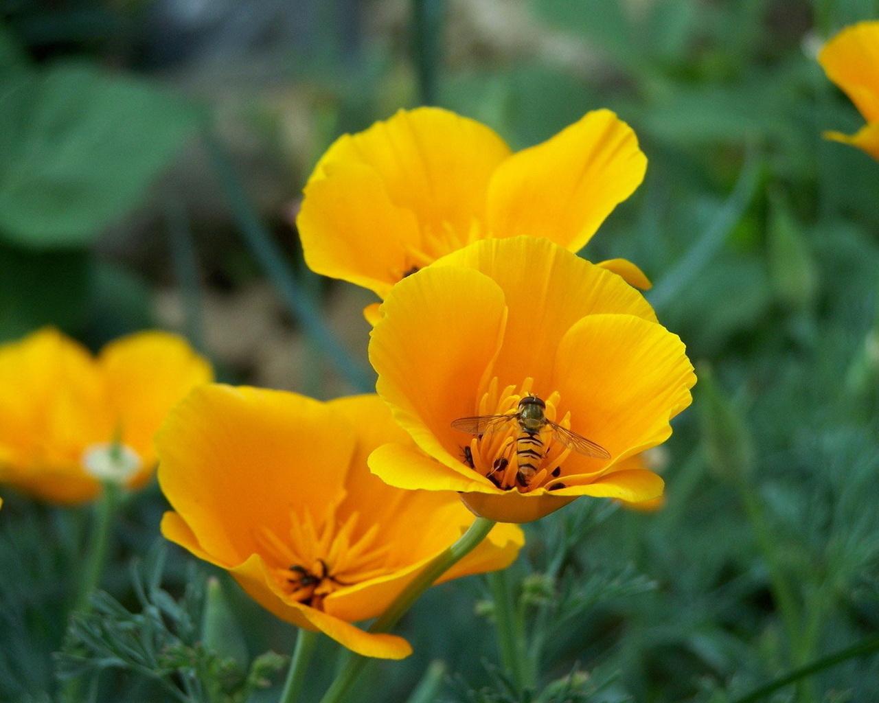 Pin sfondi tulipani viola cestino fiori grandi hd per il for Sfondi hd viola