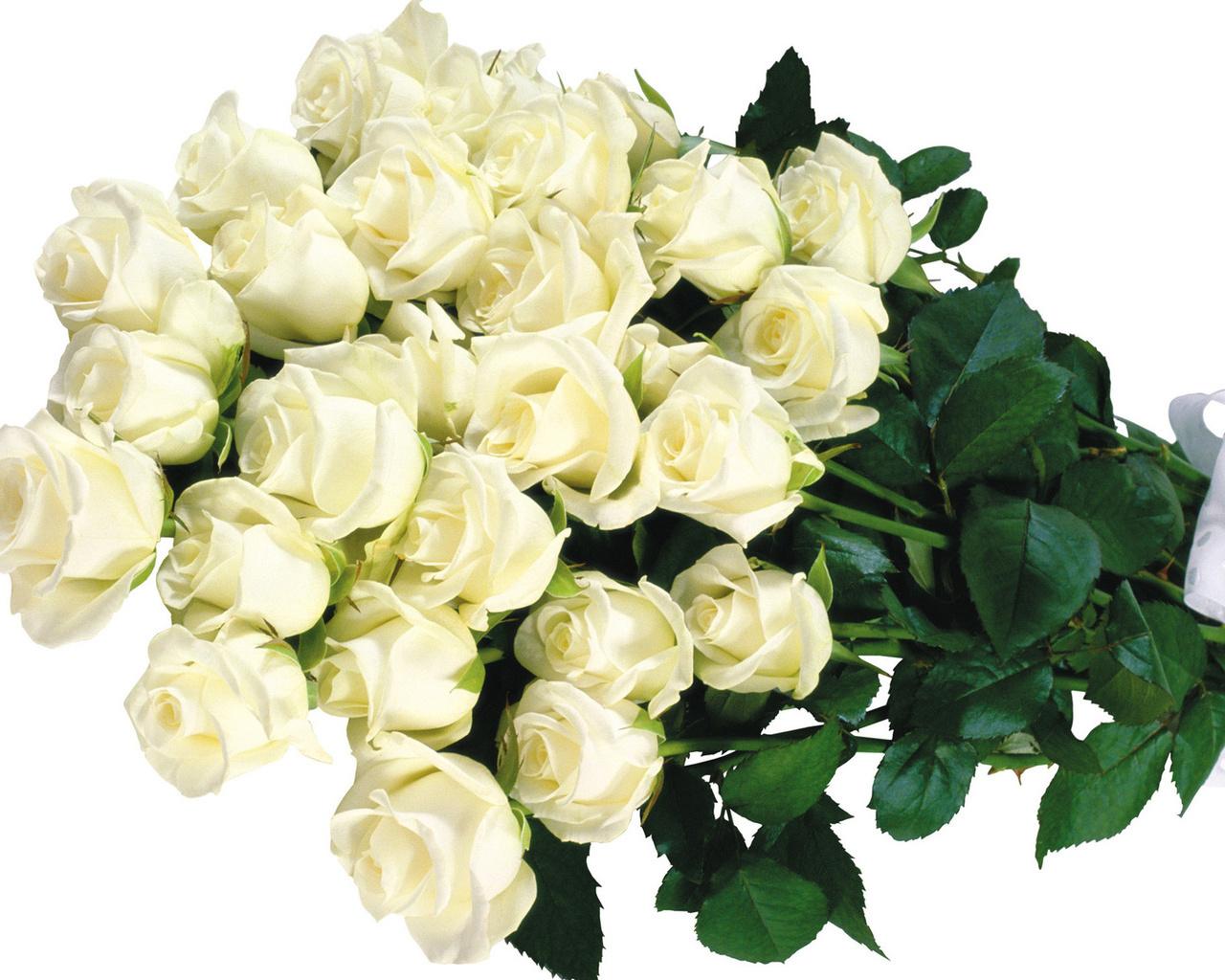 Квіти великі картинки на робочий стіл