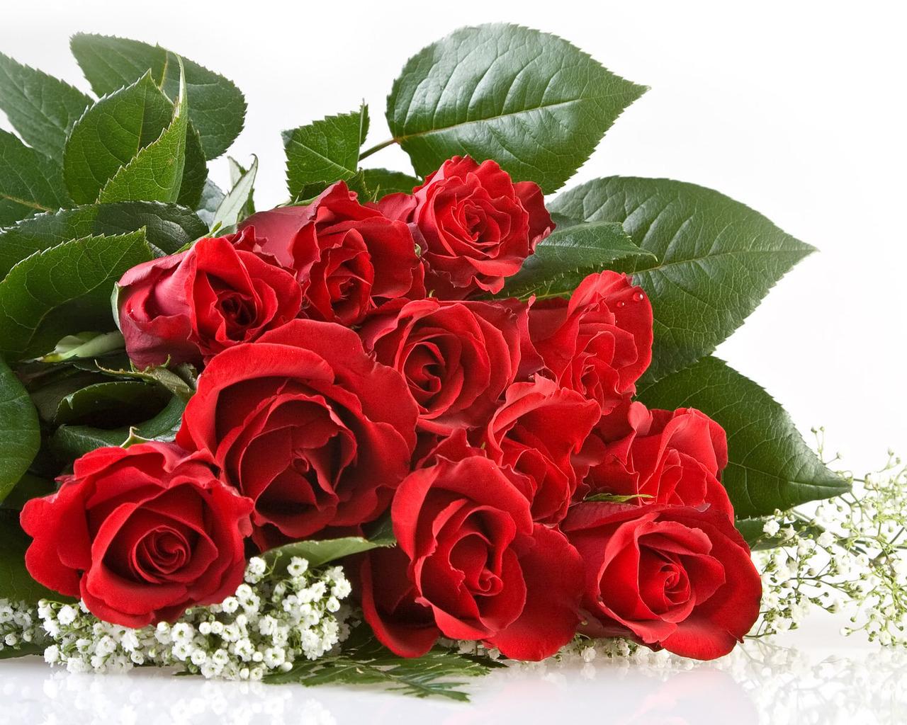 Картинка свіжі троянди квіти скачати