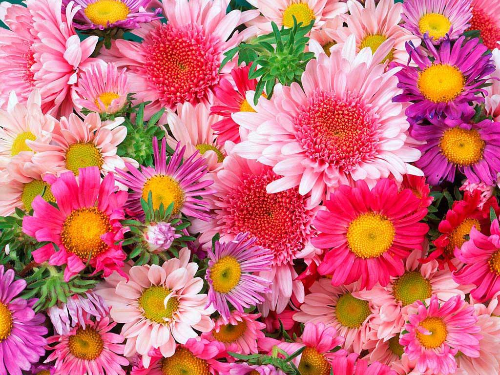 Завантажити шпалери квітів картинки
