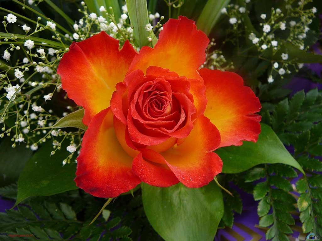 Смотреть картинки комнатных цветов 7
