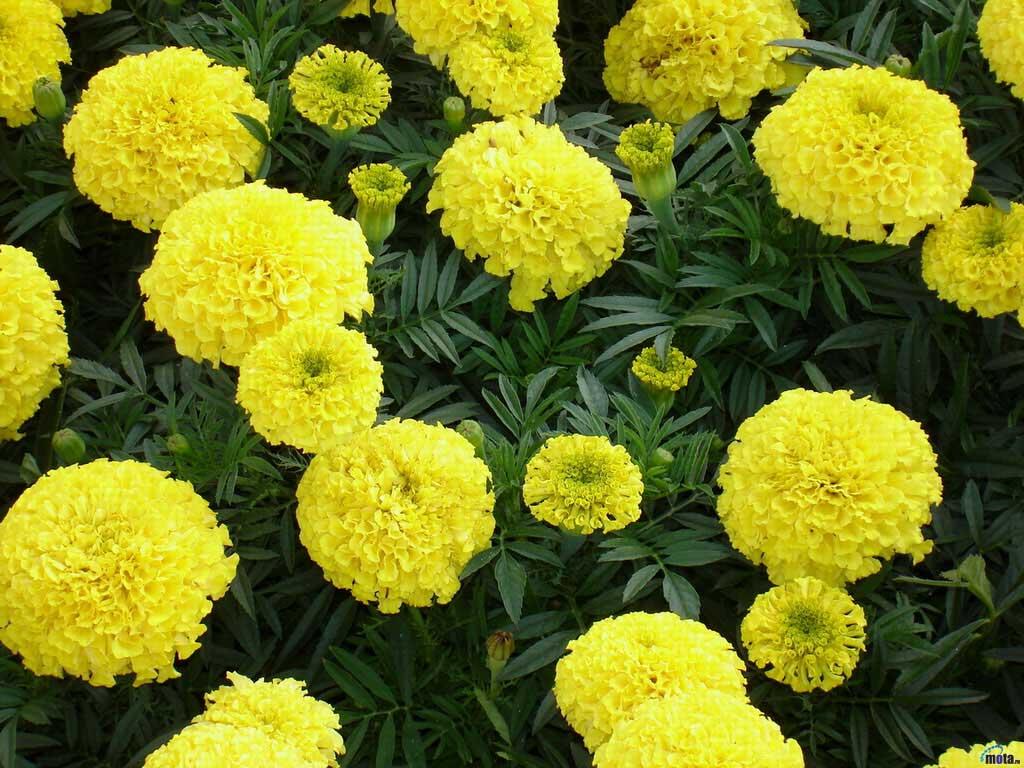 Все на комп цветы