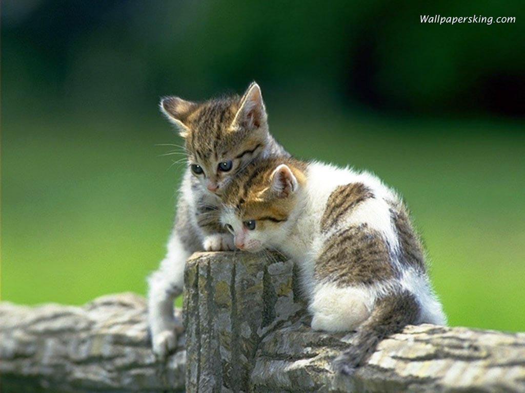 Кошки и котята смешные и очаровательные фото и картинки.