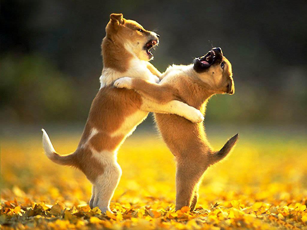 Фото драки собак 1