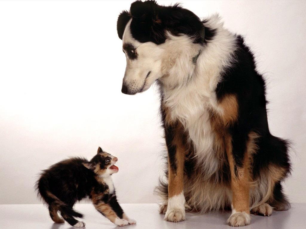 Смешные картинки собак 4