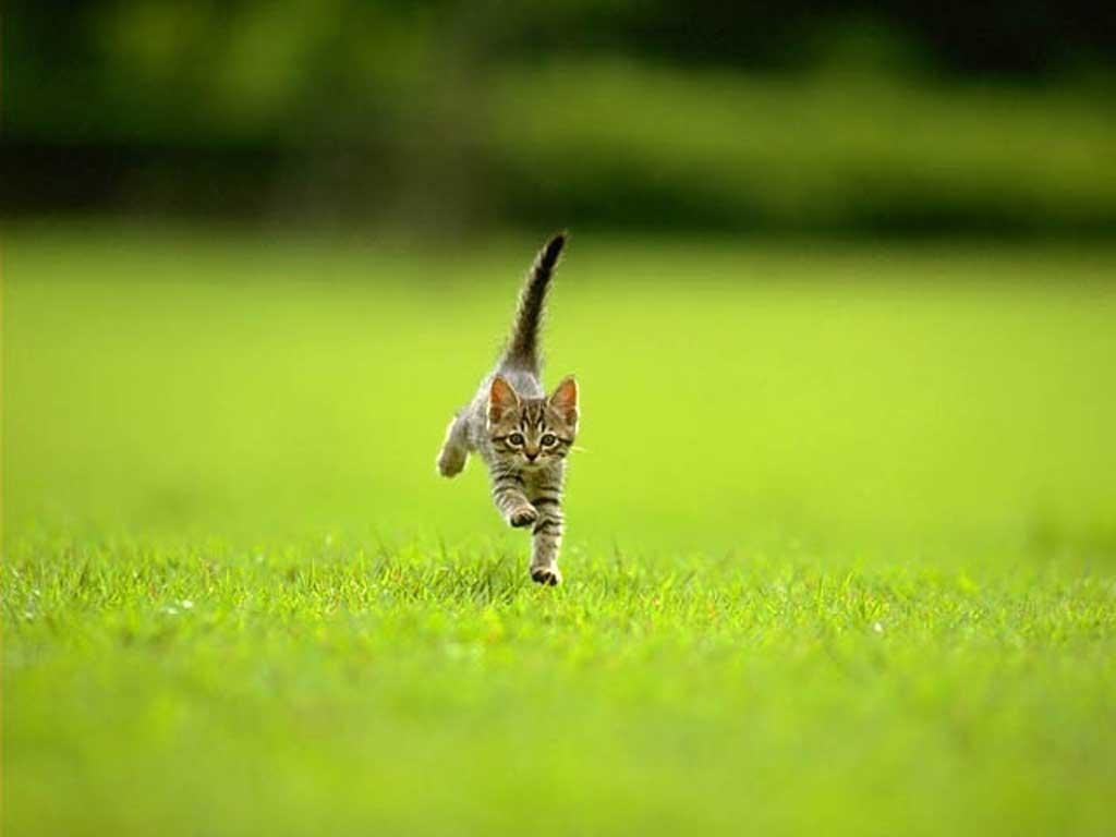 Картинка кішки кошенята кішечки