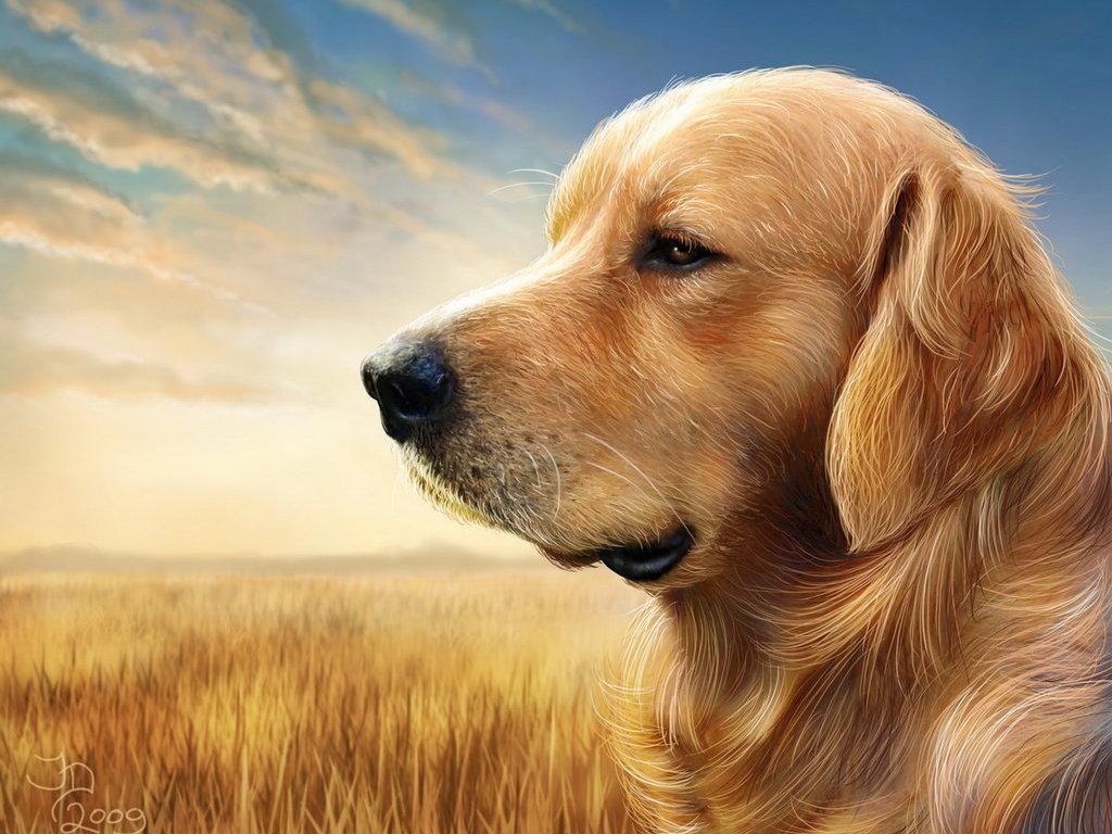 3d hund bilder wallpaper desktop ändern wallpaper für ihren