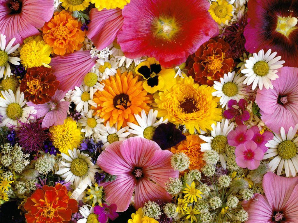 Праздничные цветы картинки 8