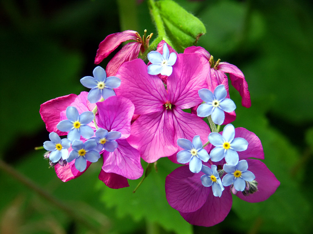 Красота цветов картинки 8