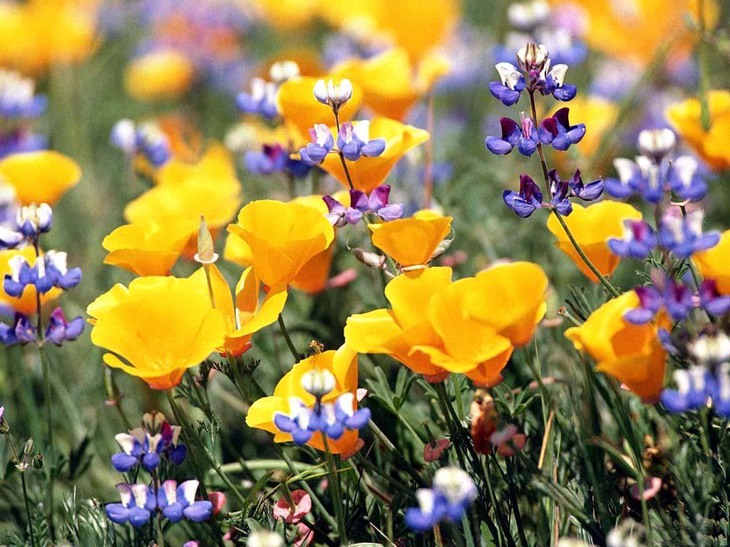 Хочу цветов картинки 6