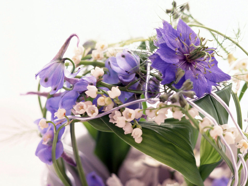 Живые цветы картинки бесплатно на