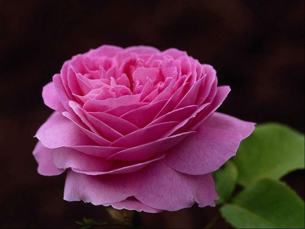 Цветы самые красивые скачать картинки 8