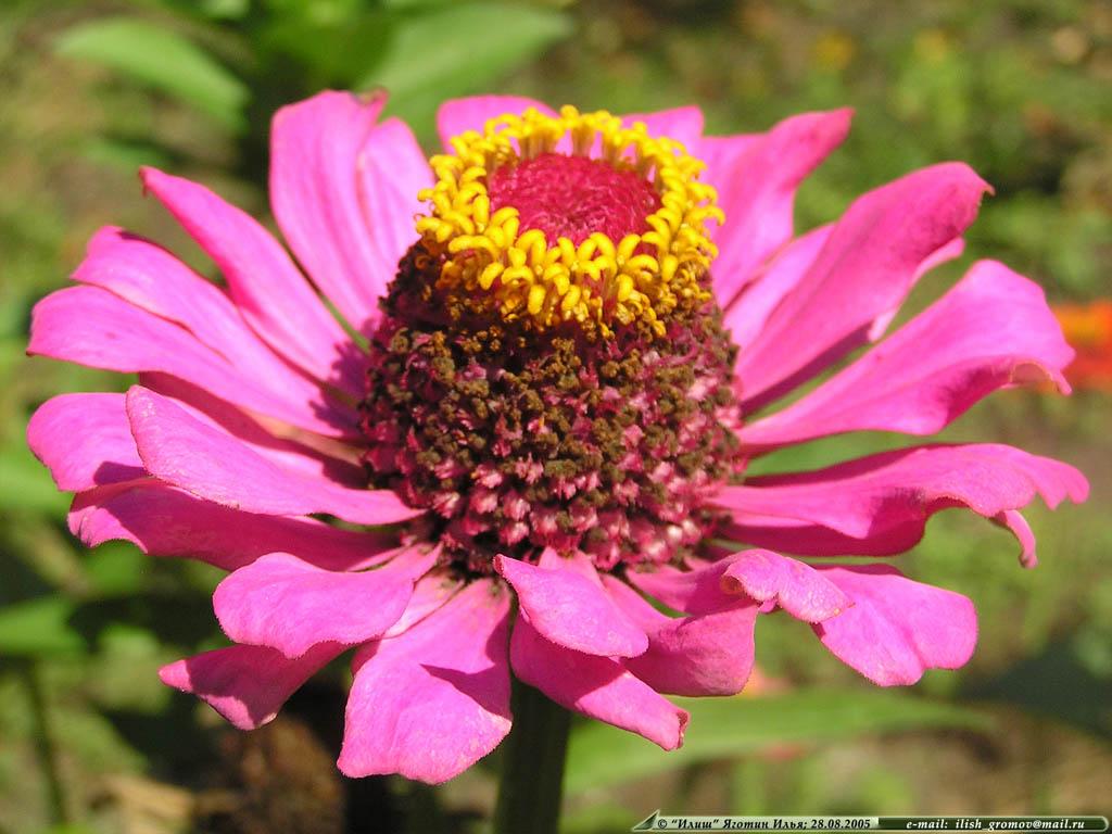 Необычный цветок и описание 57
