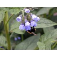 Полезные лекарственные растения фото названия и описание