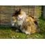 Оригинал Пушистая разноцветная кошка совершает утреннее умывание, , животные, кошки.