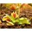 """Экзотические виды тропических и субтропических растений  """"Удивительные растения мира """" ."""