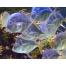 (1280х1024, 464 Kb) Прозрачные рыбки картинки и фотки на рабочий стол.